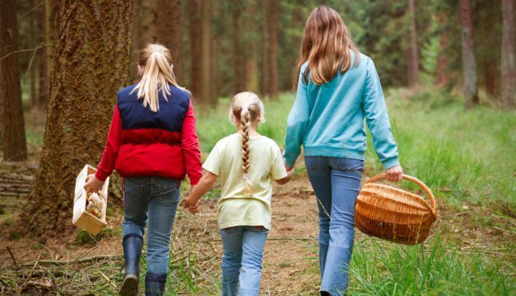 Следственный комитет не рекомендует жителям области ходить в лес за грибами