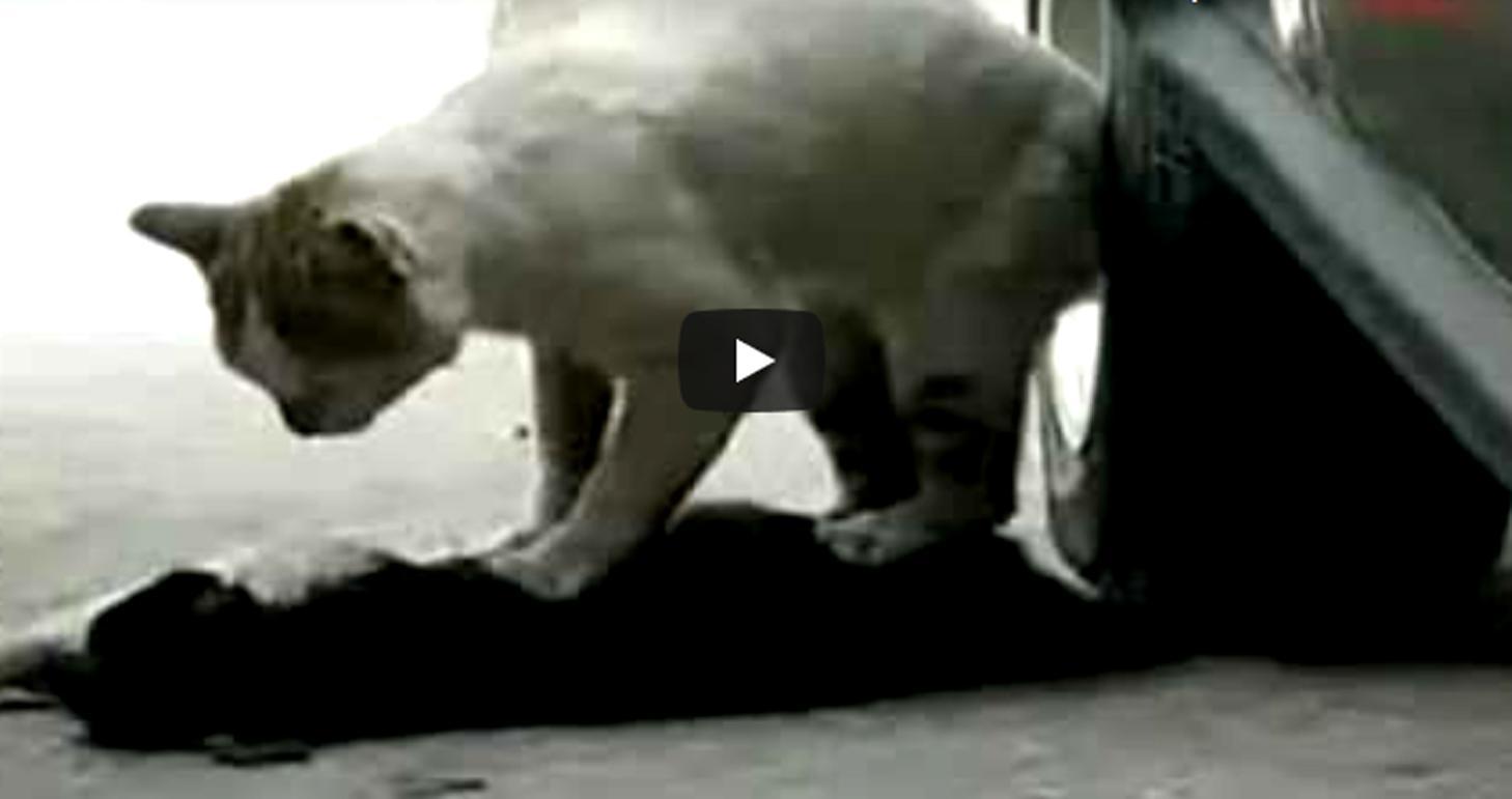 Кот спасал