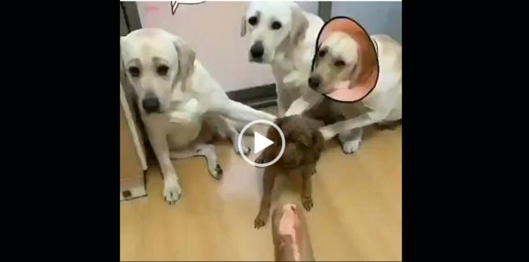 Кто съел сосиску Вечерний позитив реакция собак это нечто