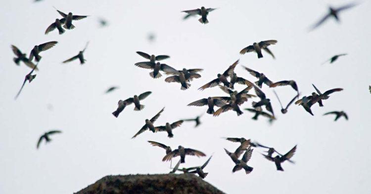 А ласточки они летали над гробом как будто хотели оживить