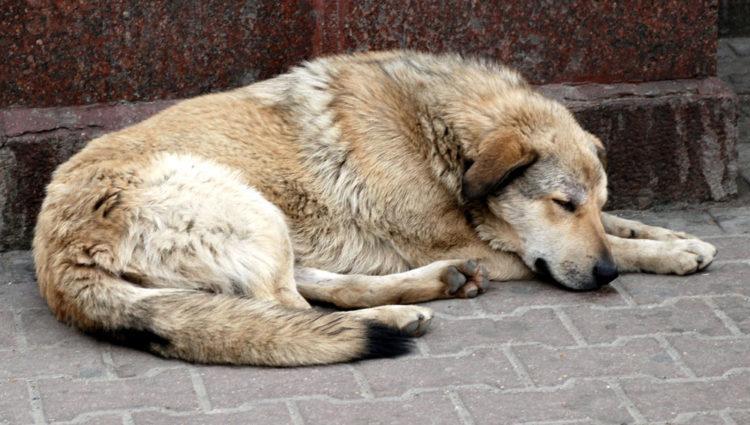 Балаковцы просят не присылать им саратовских собак