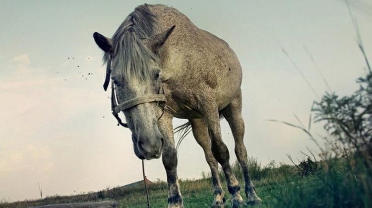 Что вам приснилось в ночь с 25 на 26 марта Уж не уставшая ли лошадь