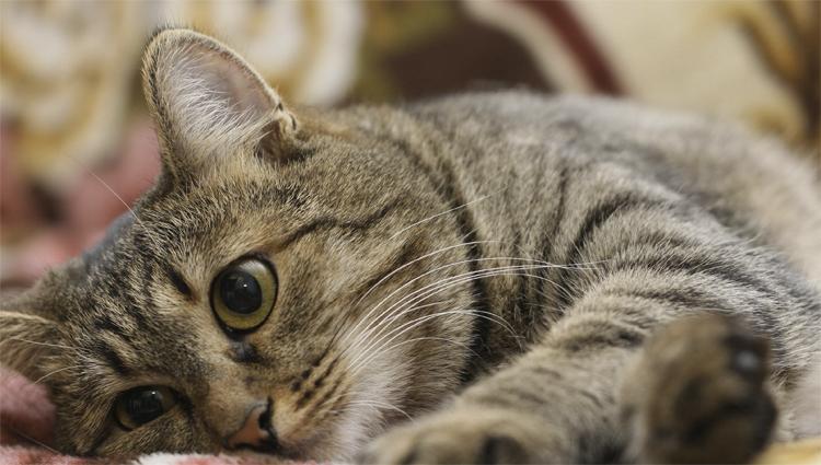 В России кошка подхватила коронавирус