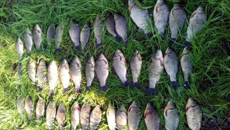 Полицейские задержали рыбака с пятью сомами и 105 карасями