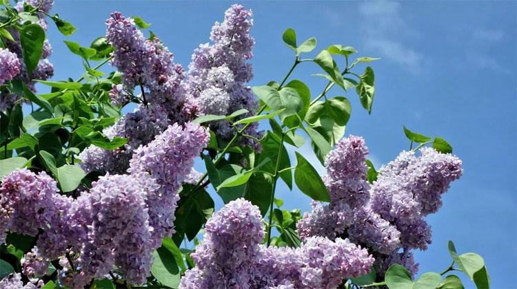 Холодный месяц май когда в Балаково погода наладится