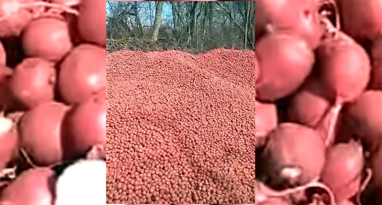 Фермер выбросил в лесополосу тонны свежего редиса