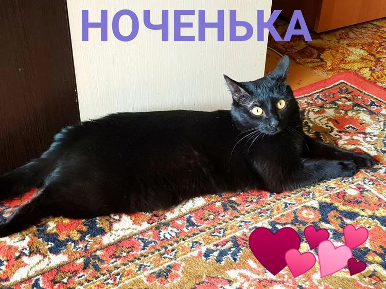 Ночка Черный Плащ на Крыльях Ночи или Моя черная кошка