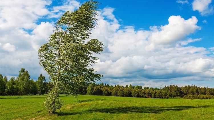 Погода в Балаково на пятницу опять этот ветер