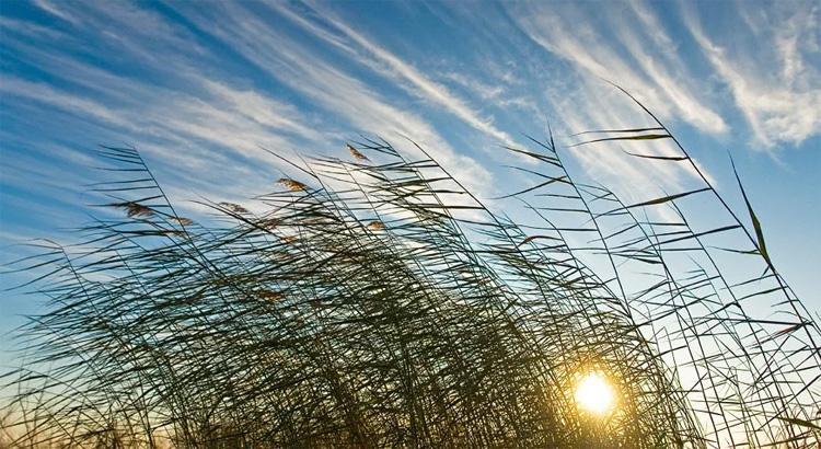 Погода в Балаково на понедельник и неделю таким будет ноябрь