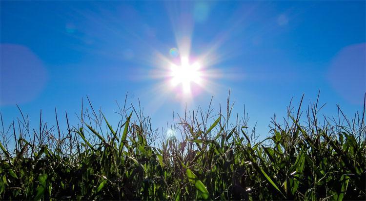 Погода в Балаково вопреки прогнозам синоптиков грядет засуха