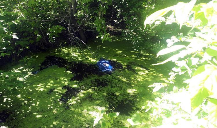 В озере на дачах у шлюзового моста в Балаково нашли тело мужчины