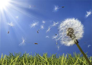 Погода в Балаково на пятницу принесет ли ветер прохладу