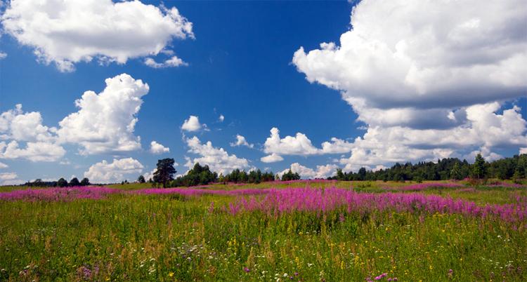 Погода в Балаково на понедельник что предвещает Макушка лета