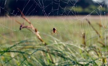 Погода в Балаково на пятницу 3 июля почему в этот день наблюдали за пауками
