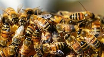 Погода в Балаково на четверг 2 июля о чем расскажут пчелы