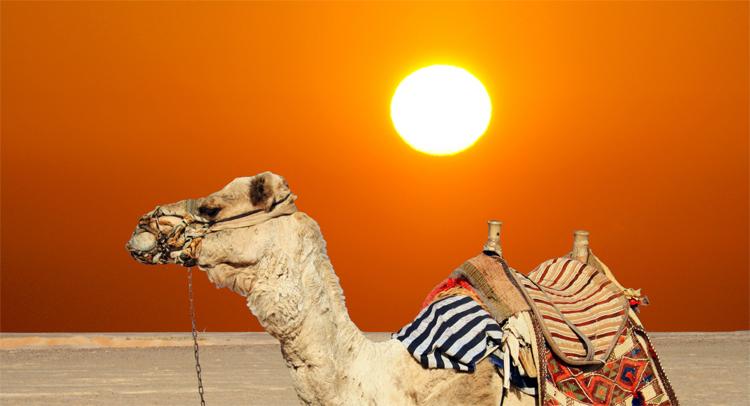 Погода в Балаково во вторник о чем поведал верблюд