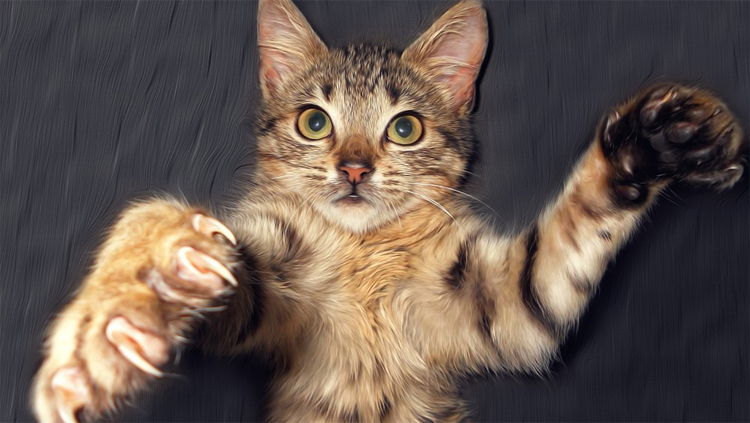 Погода в Балаково на субботу рыбакам нужно за кошками наблюдать