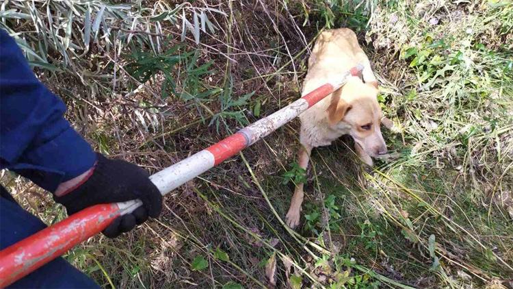 Между Балаково и Подсосенками спасли двух провалившихся в колодец собак