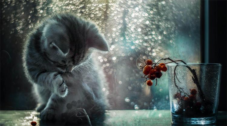 Погода в Балаково на среду кошка у вас не фыркает