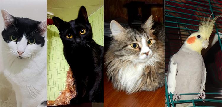 Три Кота – три судьбы и попугай Тимка