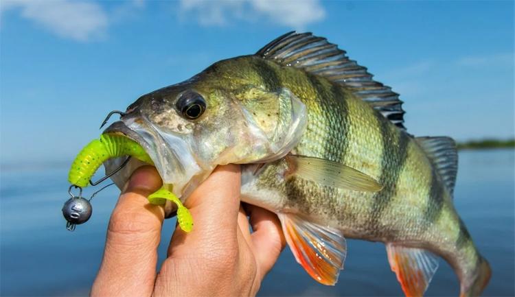 В Балаково состоятся соревнования по спортивной ловле рыбы спиннингом с берега принимайте участие