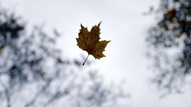 Погода в Балаково на субботу падают ли листья лицом
