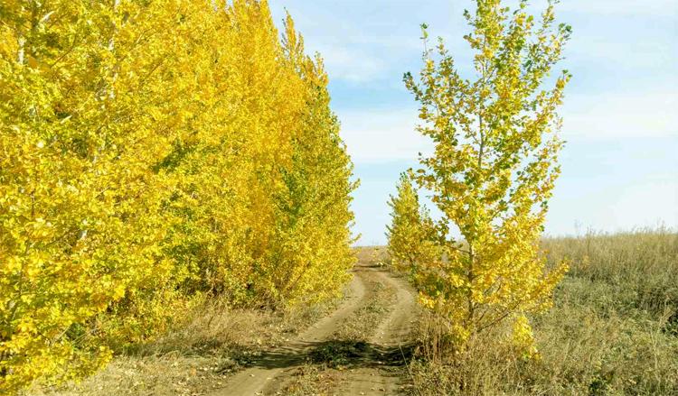 Погода в Балаково на первый день октября: печальные предвестники зимы