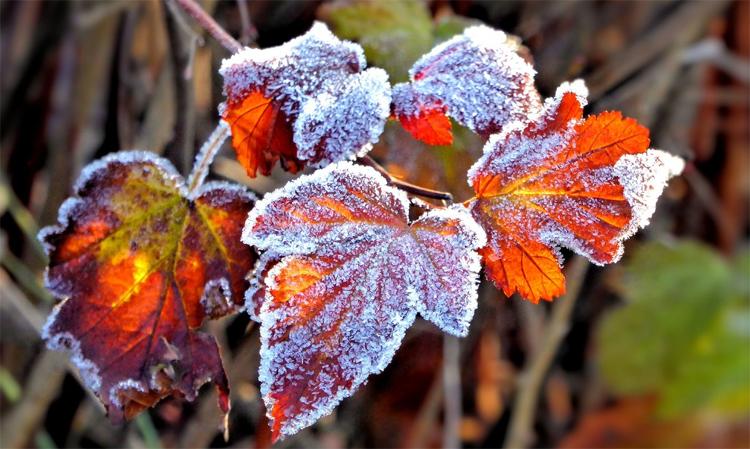 Погода в Балаково на четверг намечается потепление