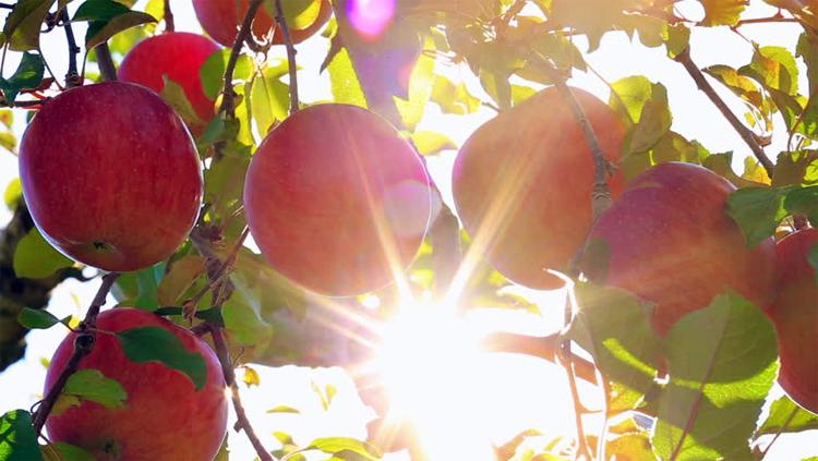 Погода в Балаково на неделю неожиданное лето для октября