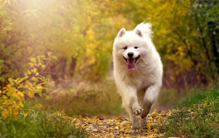Погода в Балаково на пятницу ах эта белая собака