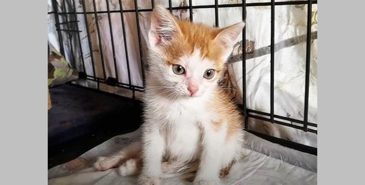 Крошечный котенок Листик дополз до деревни на одних передних лапках