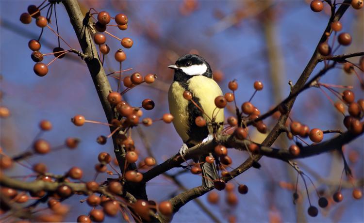 Погода в Балаково на четверг птицы подскажут погоду и помогут привлечь удачу