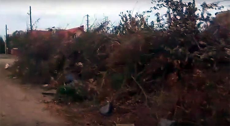 Балаковской пенсионерке посоветовали нанять танк и отвезти мусор с ее участка к администрации
