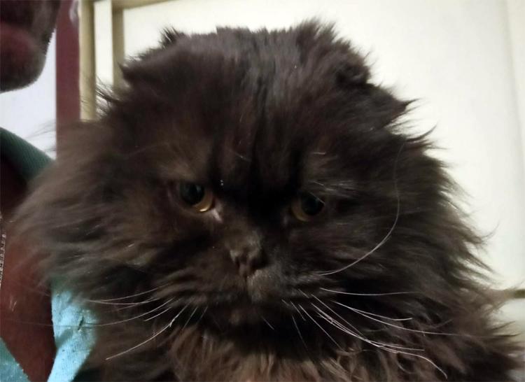 Удивительная история балаковского кота Дымки спасшегося после пожара