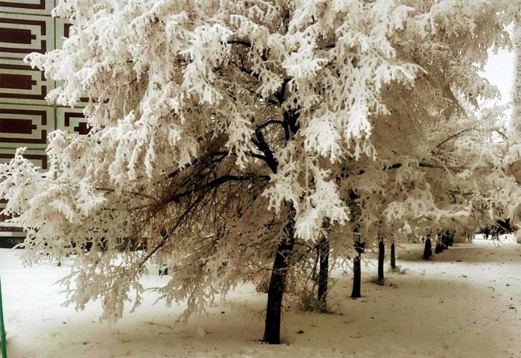 Погода в Балаково на неделю грядут сильные морозы