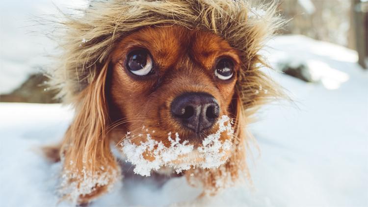 Погода в Балаково 16 февраля мороз крепчает