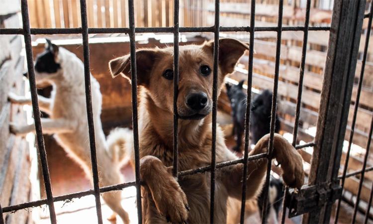 В Балаково может появиться приют для бездомных животных, построенный на пожертвования
