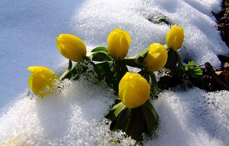 Погода в Балаково на выходные и 8 марта снег ветер и сны
