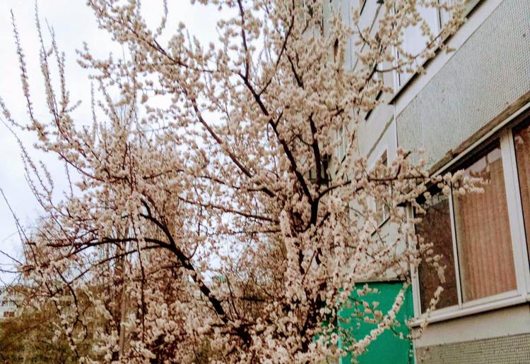 Погода в Балаково: четверг без дождя, а сны расскажут о болезнях