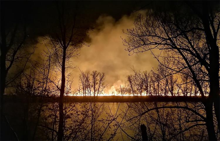 Горел камыш, деревья гнулись... В районе Красного яра вчера произошел лесной пожар
