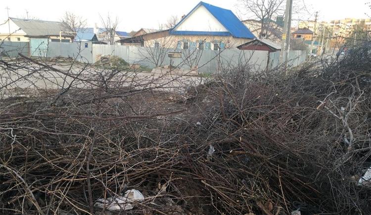 Древесные опилы регоператор вывозить из Балаково будет, а из сел района – нет
