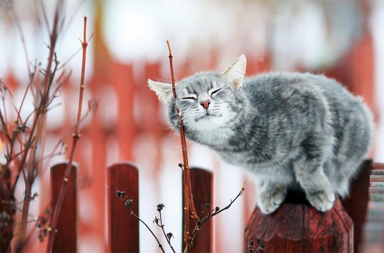 Погода в Балаково на неделю: будут ли заморозки?
