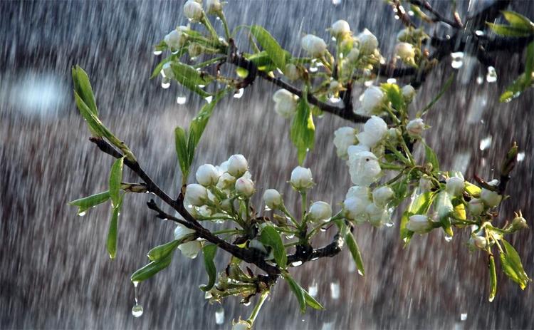 Погода в Балаково на среду: дождь. А важные дела начинайте во второй половине дня