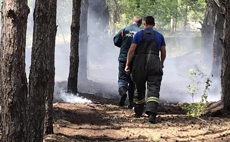 Вчера в Балаковском районе горел лес рядом с детским лагерем «Лазурный»