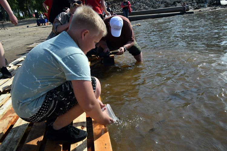 Плыви рыбка, живи Волга! «ФосАгро» поддерживает экологический баланс великой русской реки
