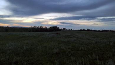 В Николевке Балаковского района пастуха убило молнией