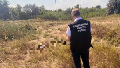 В поле у Подсосенок Балаковского района нашли скелет мужчины