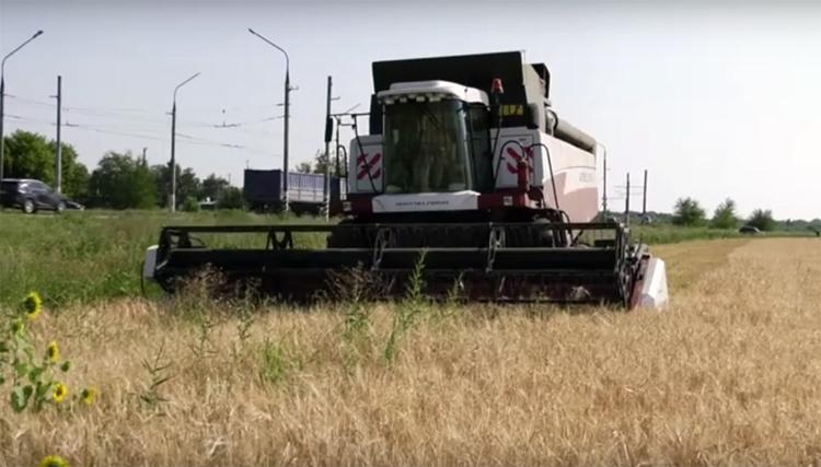 Хорошего урожая в этом году не будет: видеоновости Балаково за 21 июля