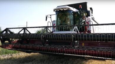 Хорошего урожая в Балаковском районе в этом году не будет